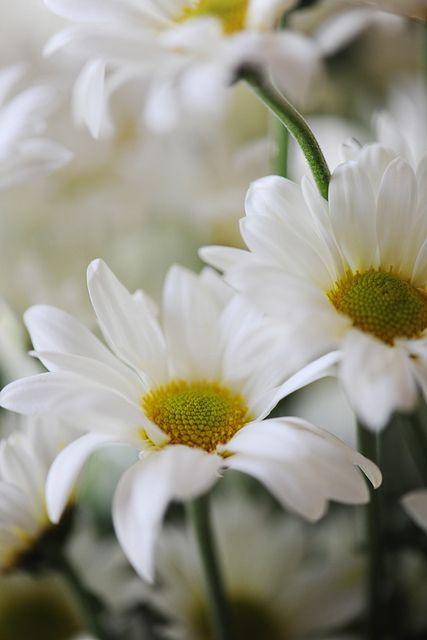 linen white daisies make me smile