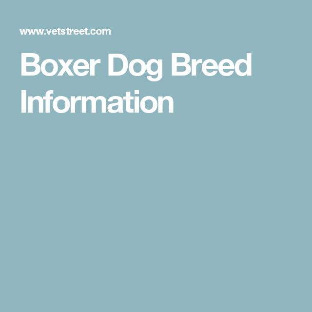 Boxer Dog Breed Information