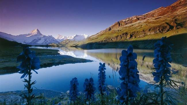 Bachalpsee, above Grindelwald, Bernese Oberland