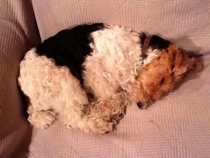 sleepy zoe - not my Zoe but she does sleep like this a lot