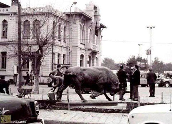 Alman Kralı II. Willhelm Istanbul'u ziyaret ettiğinde dönemin sultanı II.Abdulhamid'e bir boğa heykeli hediye eder.