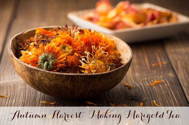 Autumn Harvest: Making Marigold Tea | Mrs Potter