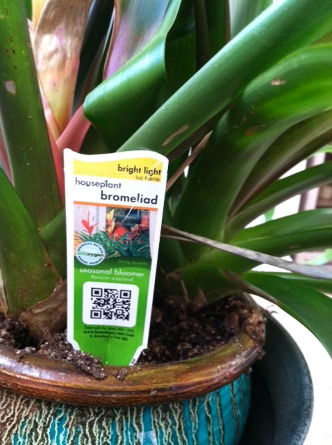 QR code on a plant tag. I'd love to learn if I could keep it alive before I brought it into my dark, dry office.