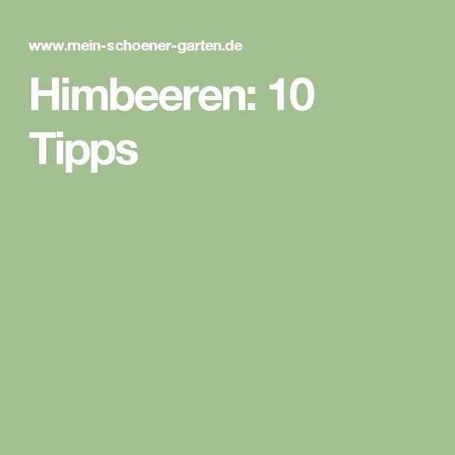Himbeeren: 10 Tipps