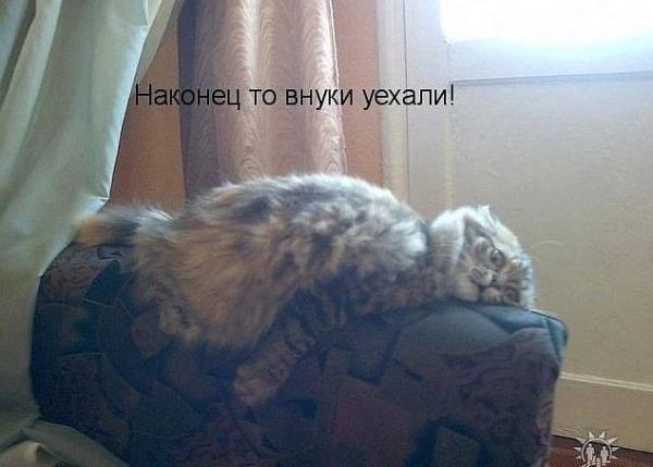Смешные фотографии кошек)