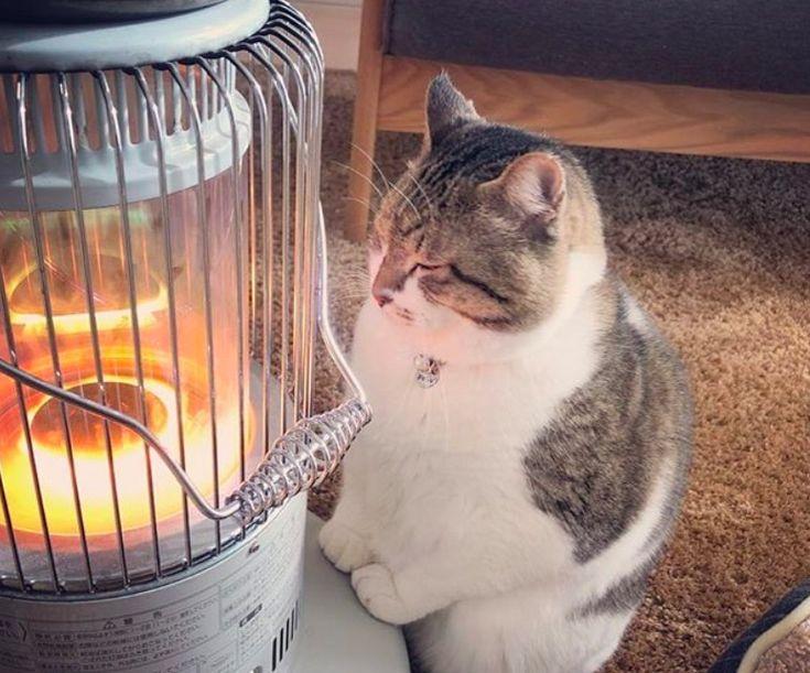 """あかあかと燃えている石油ストーブを見ると、 """"冬が来たなぁ"""" という感じがします。 ストーブのじんわりとした温もりに誘われてやってきたのは、猫の """"ぶさお"""" 。 まあ …"""