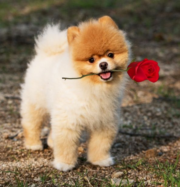 I Chews You Happyvalentinesday Cute Dogs Images Cute Names For Dogs Cute Cats And Dogs