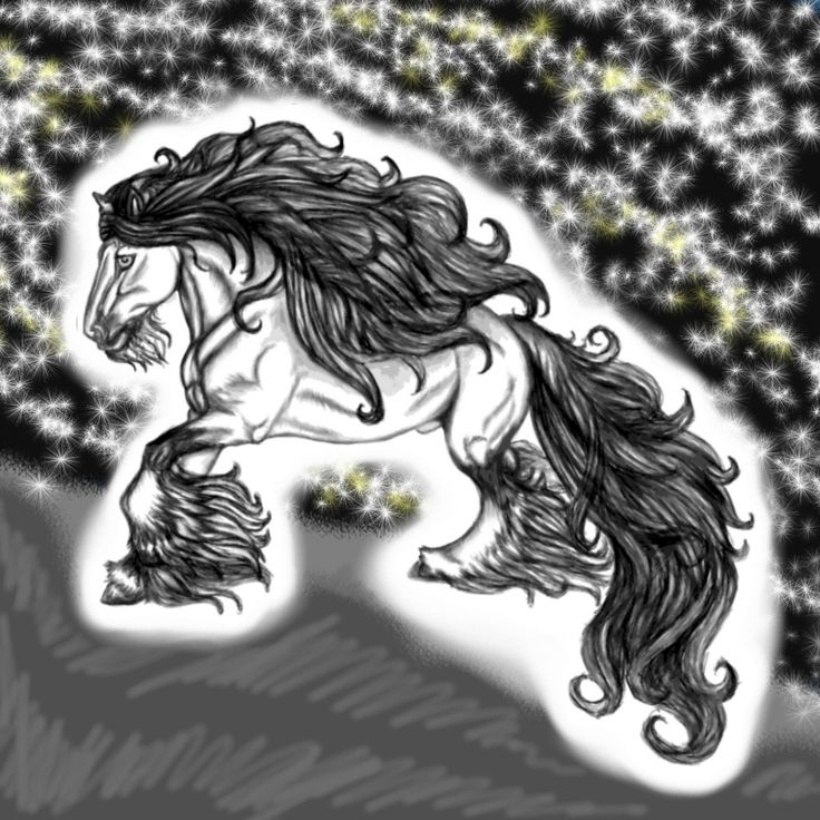 Irish tinker, Gypsy vanner, Gypsy horse, which ever name they are knwn by, they are a magnificent breed! They are one of my favorites in the world of horses, and also the horse with which I look fo...