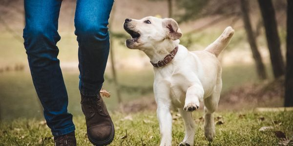Inter Dogs Trainers Specialise In Residentialdogtraining For All
