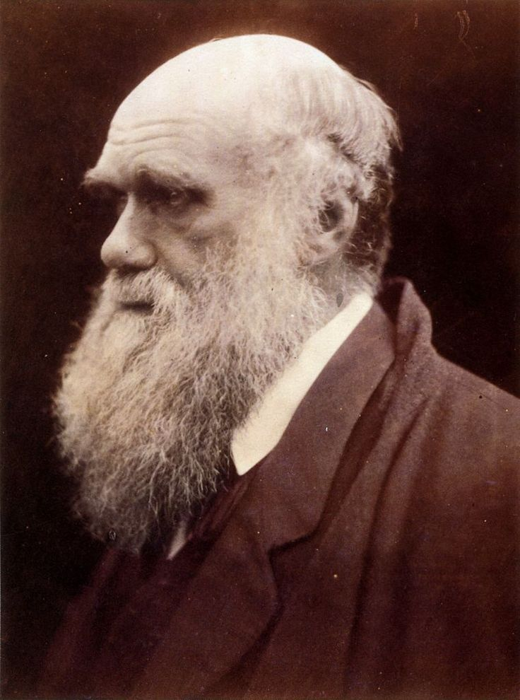 Charles Darwin, by Julia Margaret Cameron, 1868~ Charles Robert Darwin, FRS was an English naturalist. He hypothesized the theory of evolution, presenting facts which established how all species of life have descended over time from common ancestors. (Called Mr. Evolution by many, he is viewed almost like a god to Atheists or antitheists.  Some regard him as the author of the scientist's bible, but these are merely opinions and conjecture)