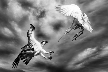 Interior Design and Home Decoration Artwork from Art Australia - buy this original signed print in 3 sizes.  Near Miss by David Rennie available via http://www.art-australia.com/near-miss-by-david-rennie/