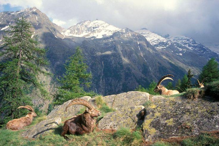Preparate lo zaino: foto dei parchi nazionali più belli d'Europa (ce ne è anche uno italiano) http://www.focus.it/ambiente/natura/una-passeggiata-tra-i-parchi-nazionali-piu-belli-deuropa…