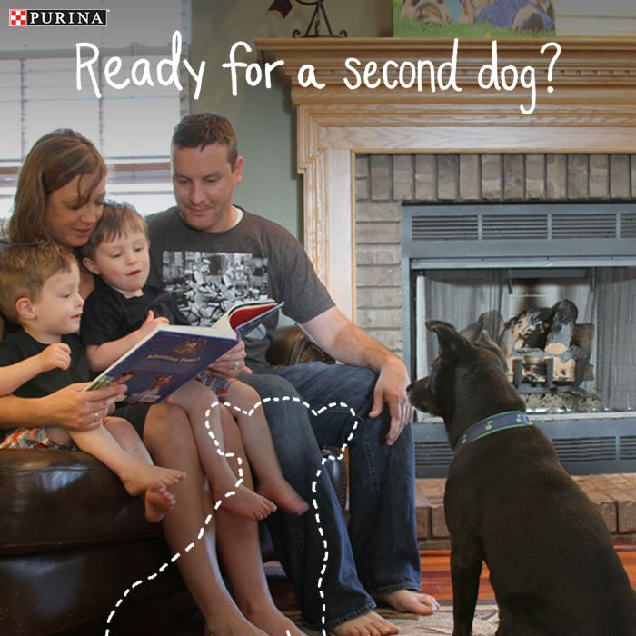 Is your family ready for a second dog? If you could never have too many dogs, check out this article from Purina.