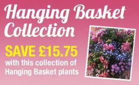 Buy Flower Seeds and Flower Plants Online | Unwins Seeds