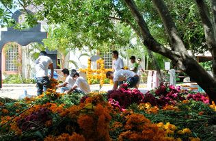 Más de una tonelada de #flores fueron traídas para la creación de los altares en la competencia de #AltarDeMuertos
