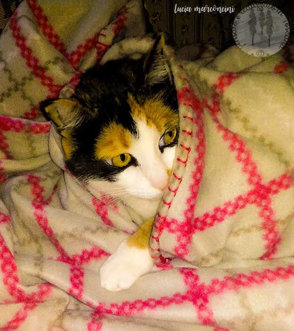 …fa freddino! In famiglia a chi spetta il divano con copertina???? Come diceva Garretty….: https://iliveintuscanyistantidiluciamarconcini.com/2016/10/13/fa-freddino/ #citazioni #foto #gatti #amorefelino