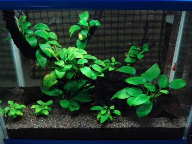 644 best images about aquarium dreams on pinterest for Petit aquarium