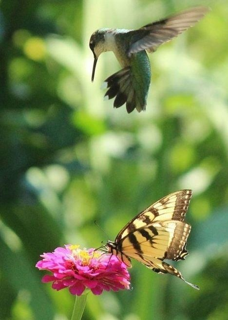 We delight in the beauty of the butterfly, but rarely admit the changes it has gone through to achieve that beauty.  ~Author Unknown..