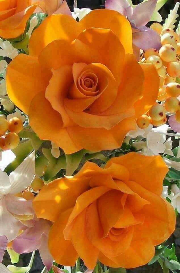 Rosas anaranjadas | Orange roses - #flores #flowers