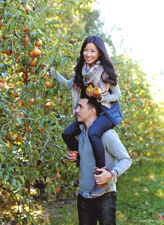 Pear Picking at Honey Pot Hill