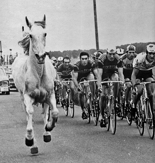 """1976. A fianco del gruppo un """"tifoso"""" d'eccezione per Walter Godefroot (1943), Eddy Merckx (1945) e Cees Priem (1950)"""