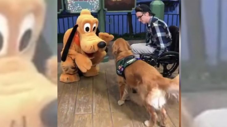 FOX NEWS: Service dog meets Pluto at Disney World in adorable viral video