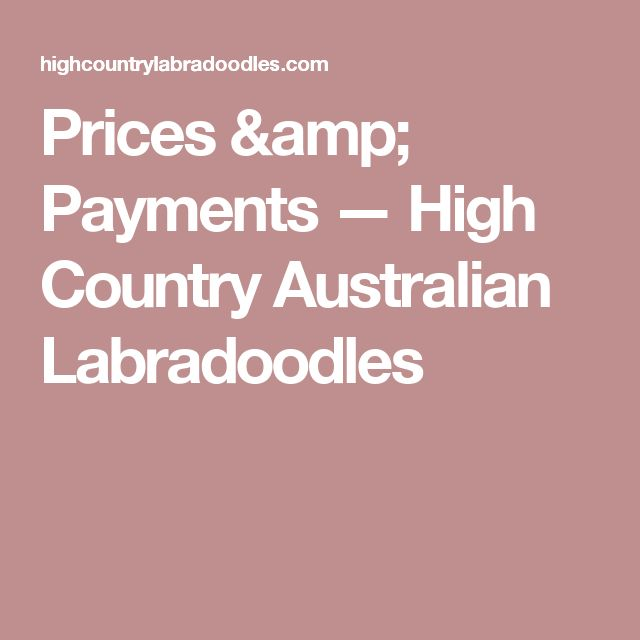 Prices & Payments — High Country Australian Labradoodles