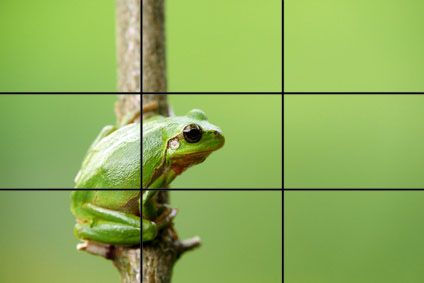 I say this is rule of thirds because the frog is in 2 thirds of the picture and the other third is used by the green background. - S Smith