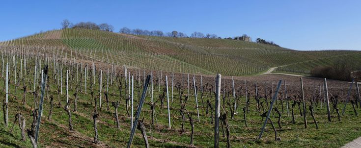 #baden wrttemberg #burdensome #castle #grape varieties #grapes #heilbronn #help mountain #hiking #hill #landscape #landscape format #outlook #panorama #pattern #peaceful #region #ruin #rural #shades of green #slope #