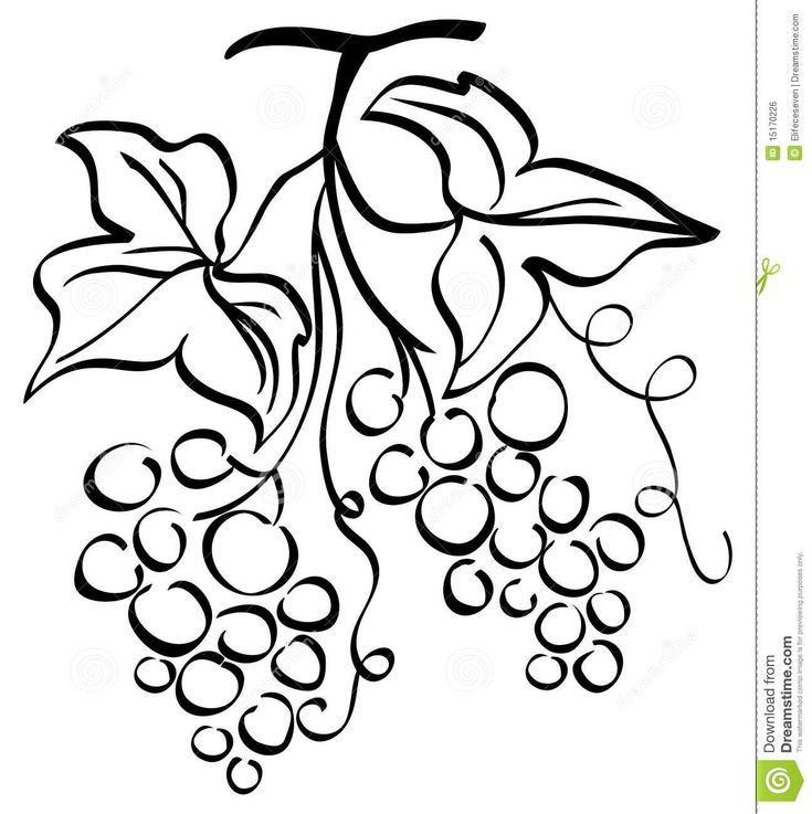 Grape Illustration - Download From Over 48 Million High Quality Stock Photos, Images, Vectors. Sign up for FREE today. Image: 15170226