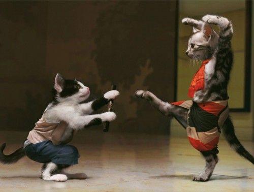gatos pelean juegan
