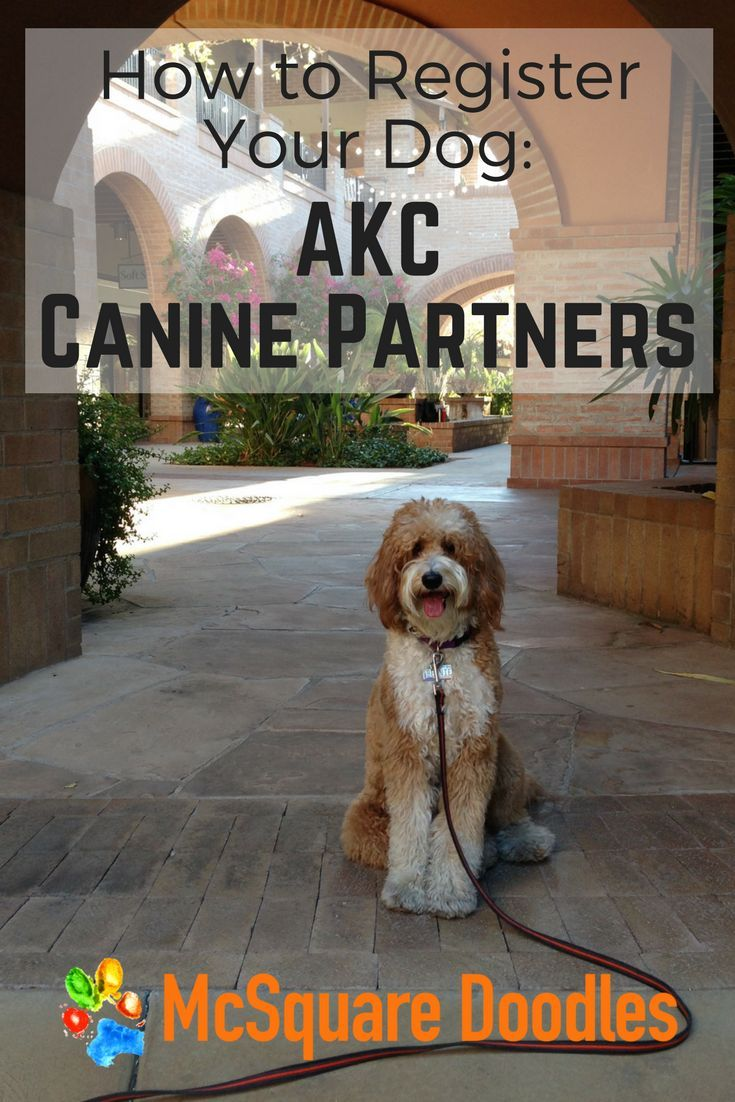 How To Register Your Dog For Akc Canine Partners Dog Training