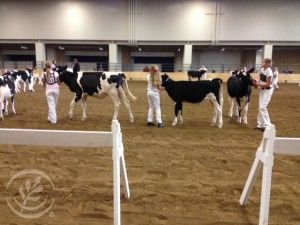 Why does showing animals in 4-H matter? 8 lessons kids learn...