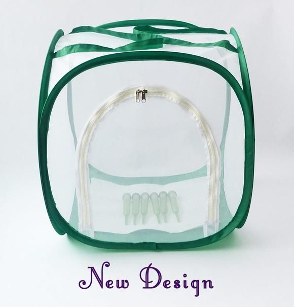 Baby Cube Butterfly Cage for Raising Monarch Butterflies