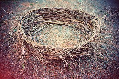 ADRIEN DEGGAN'S BLOG: Building a Giant Nest With the Deggan Brothers.