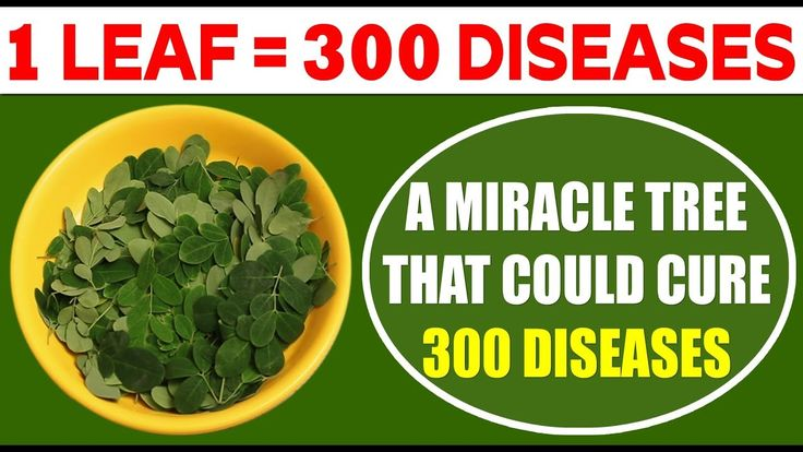 Useful Info | Only 1 Tree That Can Cure More Than 300 Diseases