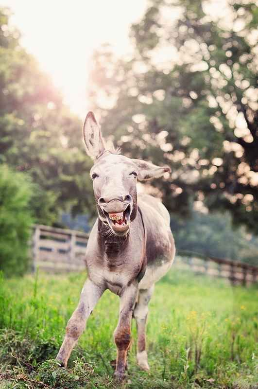 The morning of the first ever donkey selfie. | The 35 Happiest Moments In Animal History