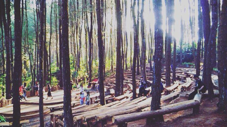 #pine #pineforest #yogyakarta