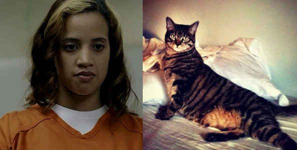 """Dayanara """"Daya"""" Diaz -- This Seductive Yet Defiant Yet Conflicted Cat 