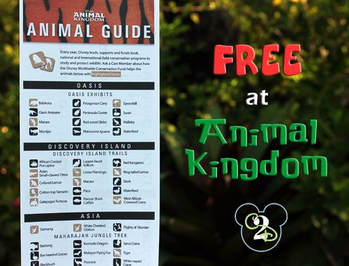 Pin this so you remember to grab the Animal Kingdom Animal Guide. This FREE guide lists all of the animals that you might see around the Animal Kingdom throughout your visit.