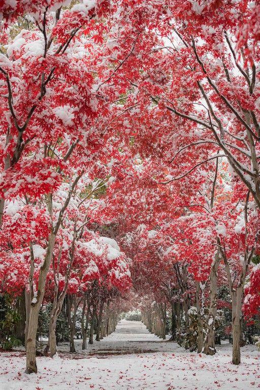 Hokkaido _autumn winter