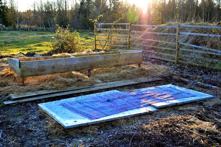 Preparing hot beds. Sweden, December 2014. http://www.skillnadenstradgard.blogspot.se/ #garden #gardening #hotbeds #wintergarden #trädgård #odla #varmbänk