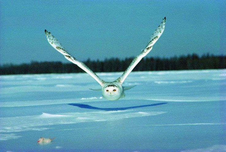 OWL GET YOU