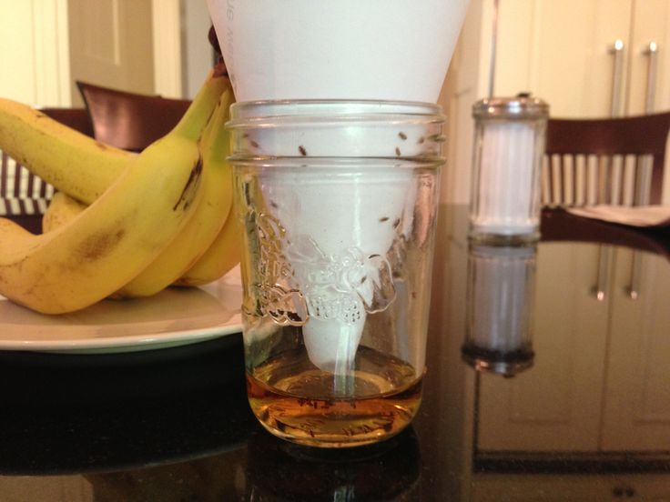 how to make a fruit fly trap cone
