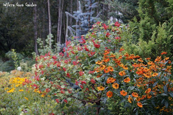 Autumn starts in Wilcza Gora Garden...