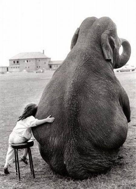 słoń najlepszy przyjaciel :D