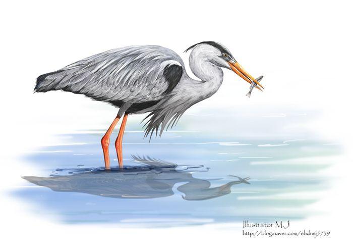 왜가라 세밀 삽화 heron illustration watercolor