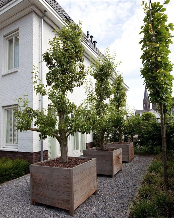 Binnenkort peren eten uit eigen tuin. Oude perenbomen in houten plantenbakken. #ttbsmeulders #perenboom #plantenbak #eten #zomer #buiten #modern #natuur #style #bomen #tuin #tuinaccessoires #ontwerp #aanleg #onderhoud #olijvenboom #origineel #uniek #tuininspiratie #planten #like #nature #new #garden #tuindecoratie #tuinieren #grind