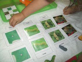 Mi Escuelita Montessori: Ciclo de Vida de la Mariposa / Life Cycle of the Butterfly