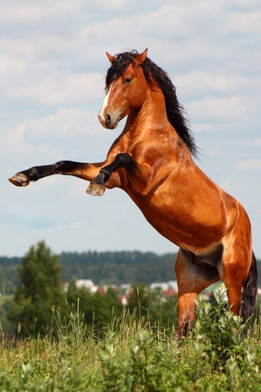 The essential joy of being with horses is that it brings us in contact with the rare elements of grace, beauty, spirit, and fire.  Sharon Ralls Lemon